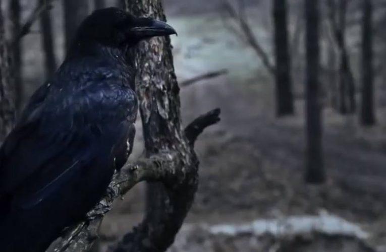 """""""Чорний ворон"""": слабкість кіно проти сили літератури"""