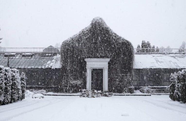 Фільм «Історія Зимового Саду» вийшов онлайн на Takflix