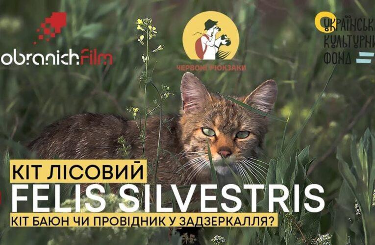 Кіт Лісовий: вийшов перший випуск програми «Червоні рюкзаки» на youtube